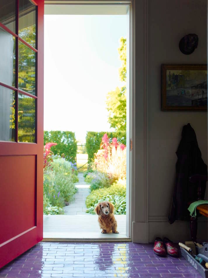 dachschund standing in a doorway