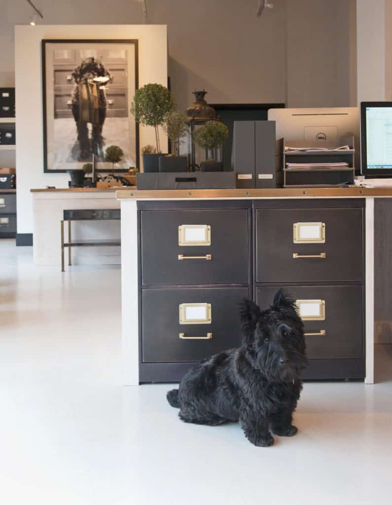 Pet Friendly Interior Design Ideas By Dkor: 17 Dog-Friendly Interior Design Ideas