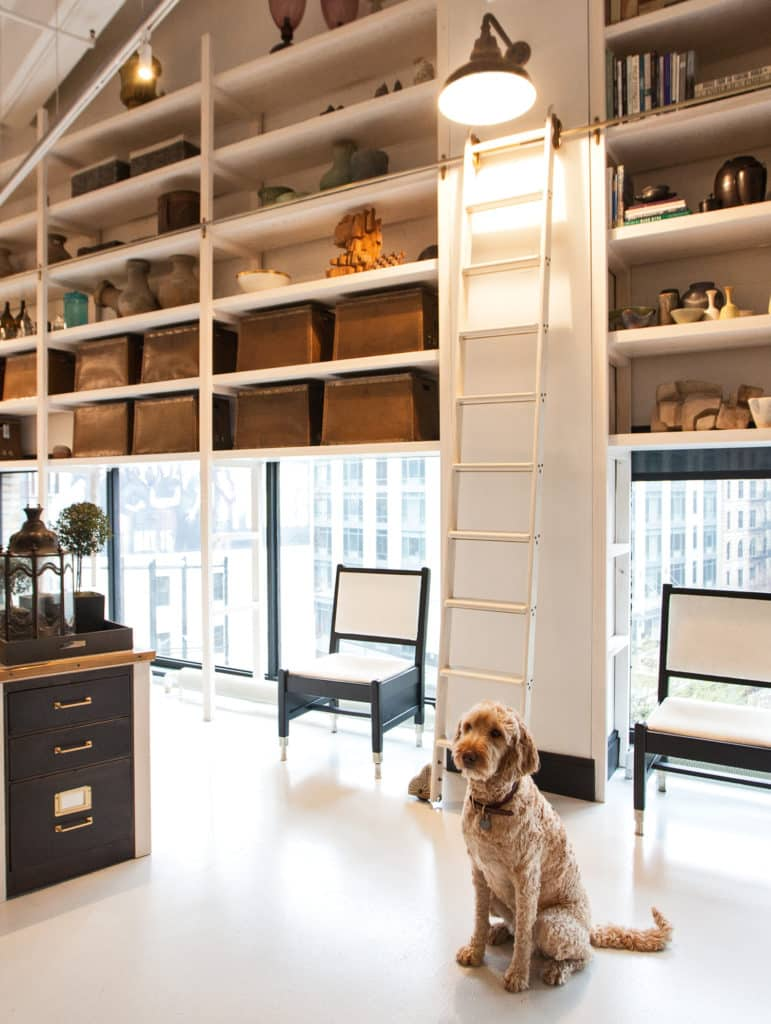 Steven Gambrel's dog Sailor