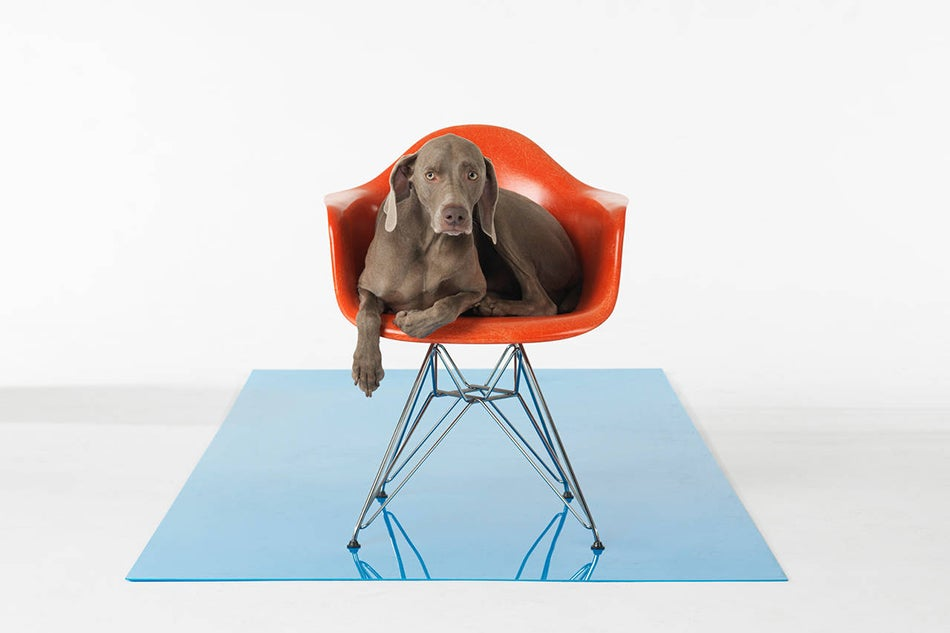 William Wegman S Weimaraners Photography Amp Fine Furniture