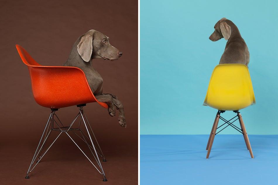 William Wegman S Weimaraners Photography Amp Fine Furniture
