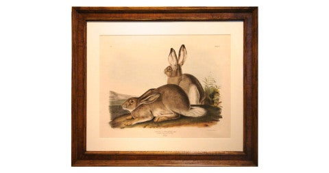 <i>Rocky Mountain Hare (Pl. III),</i> ca. 1842, by John J. Audubon, offered by Daniel Stein Antiques