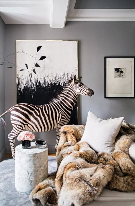 living room zebra taxidermy
