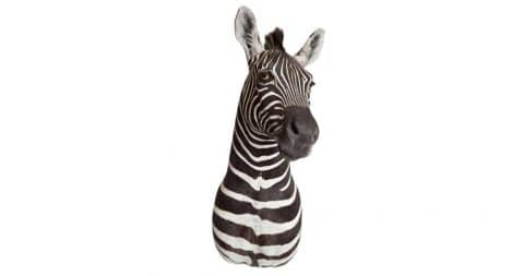 Taxidermied zebra, ca. 1980, offered by Area ID Inc.