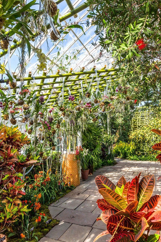 For Floral Artist Daniel Ost, Orchids Are Living Sculptures