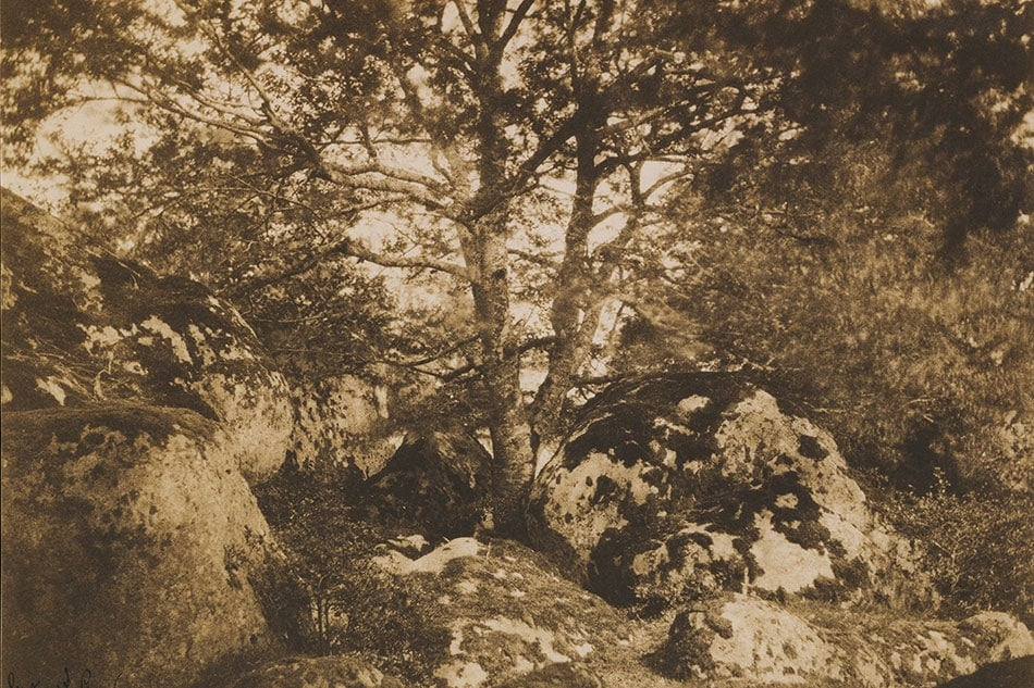 Gustave Le Gray Oak Trees and Rocks at Fontainebleau Forest Public Parks, Private Gardens: Paris to Provence French France Metropolitan Museum of Art New York