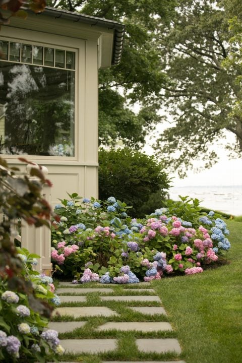 Westchester flowering bushes by Janice Parker