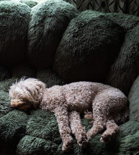 Olive on Campana brothers sofa