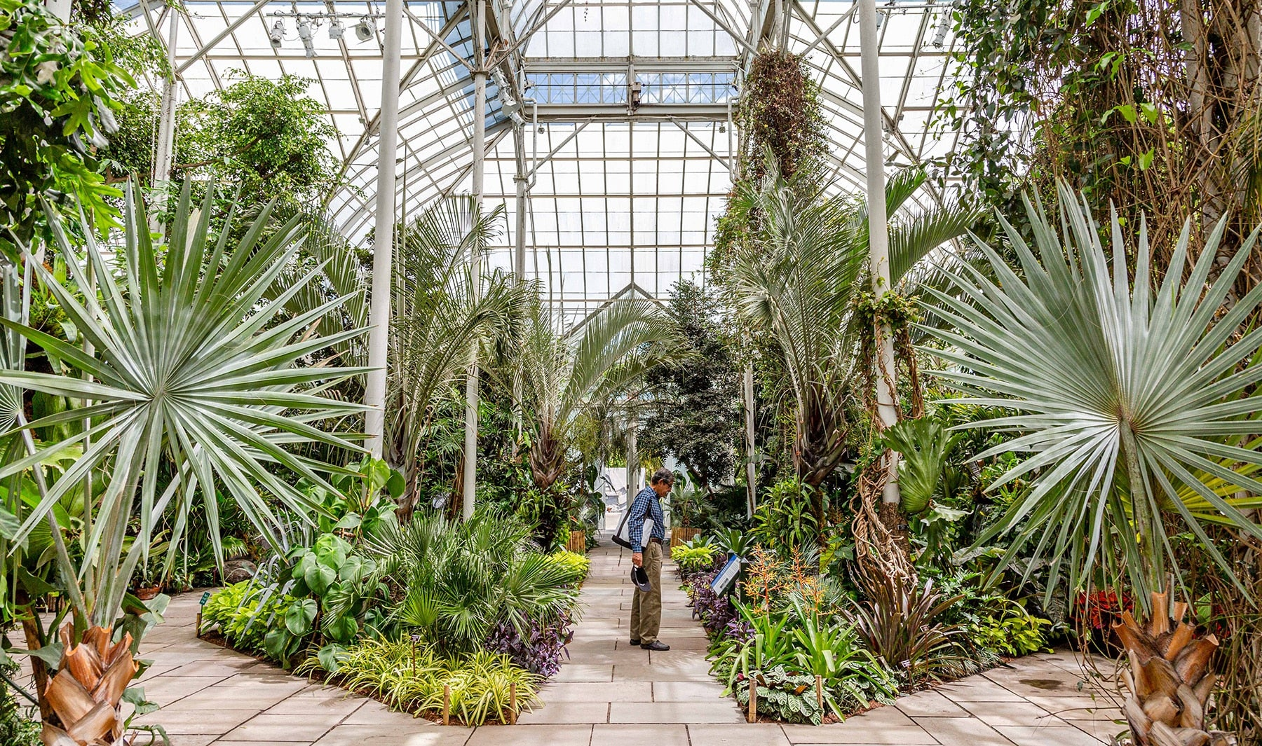 Inside the Greenhouse at the NYBG Burle Marx Show