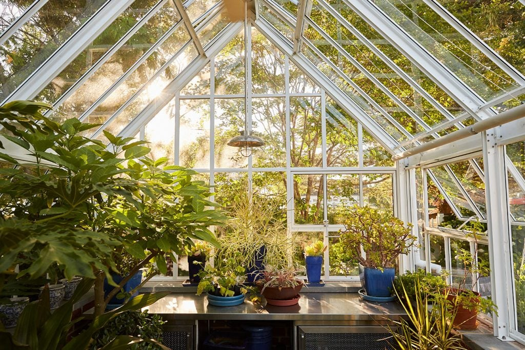Greenhouse at the Maryland Property