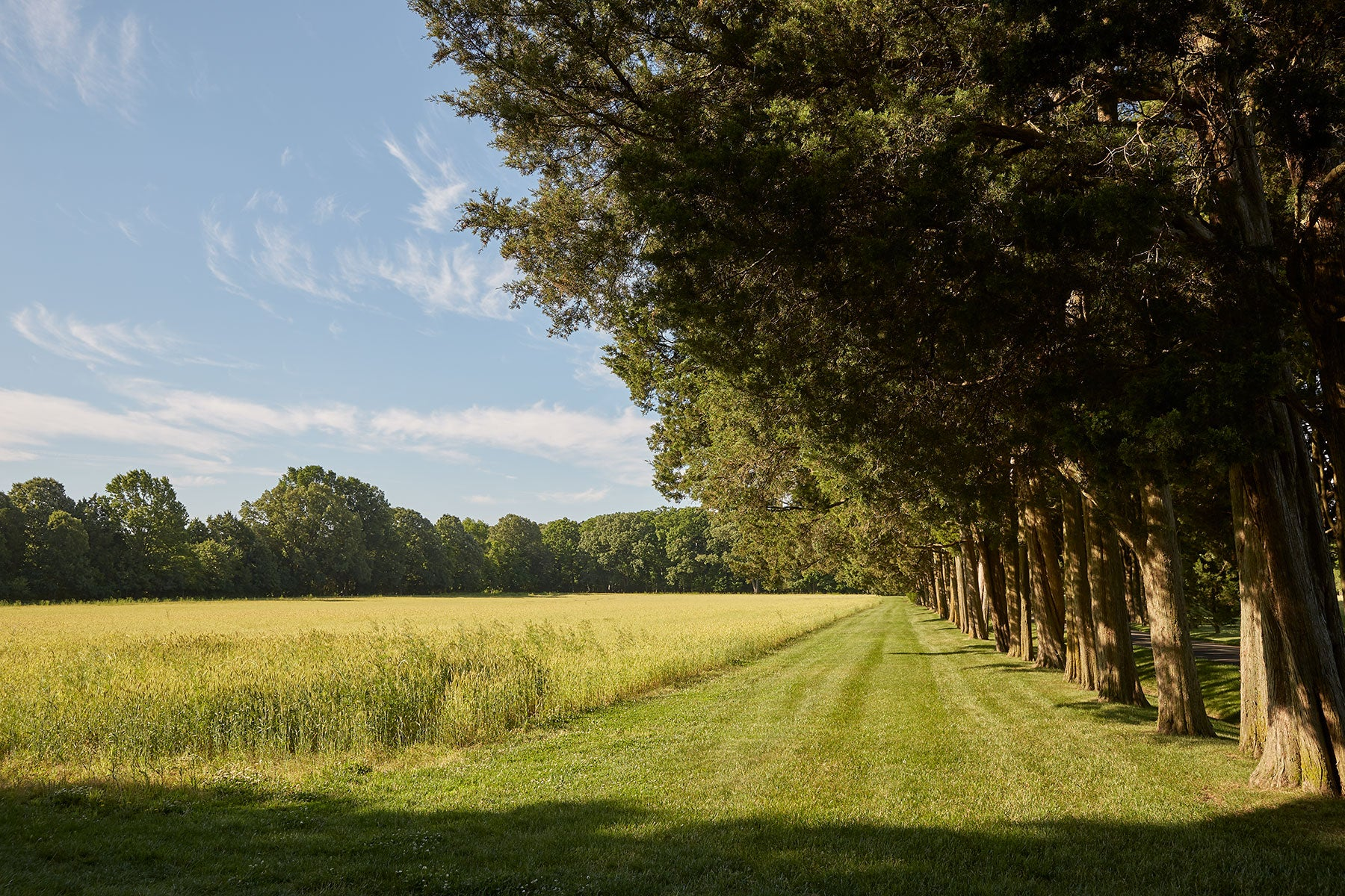A grassy lane designed by Paca